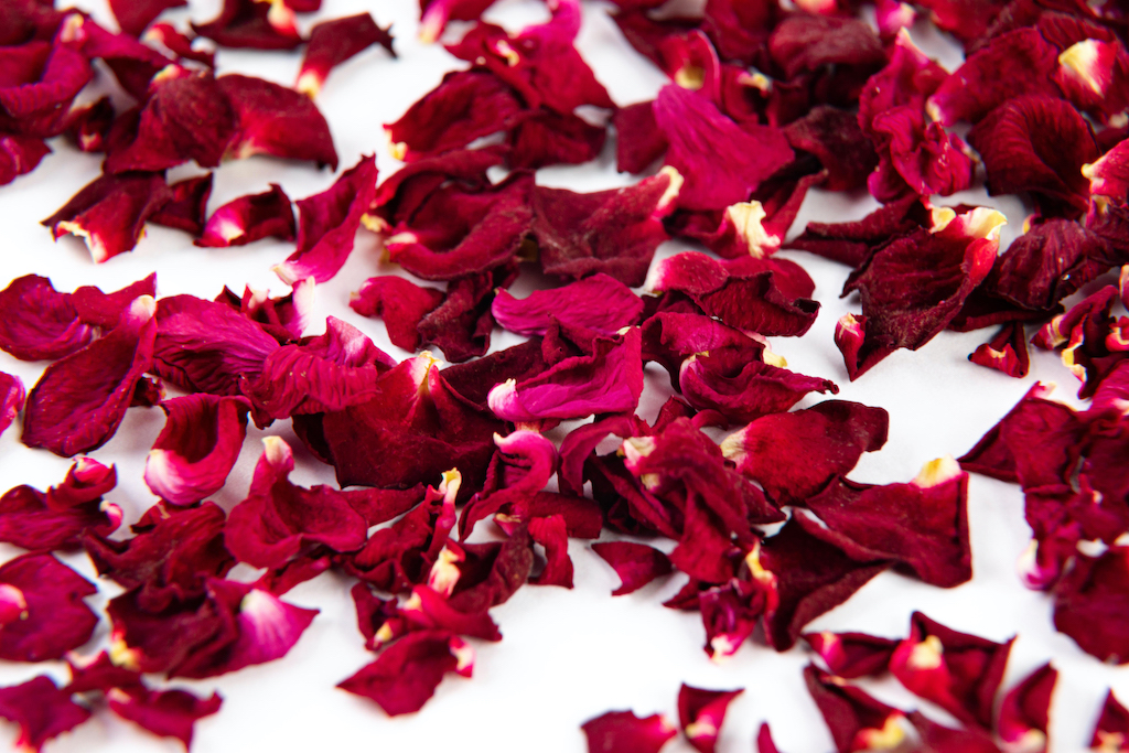 Rote Rosenblütenblätter
